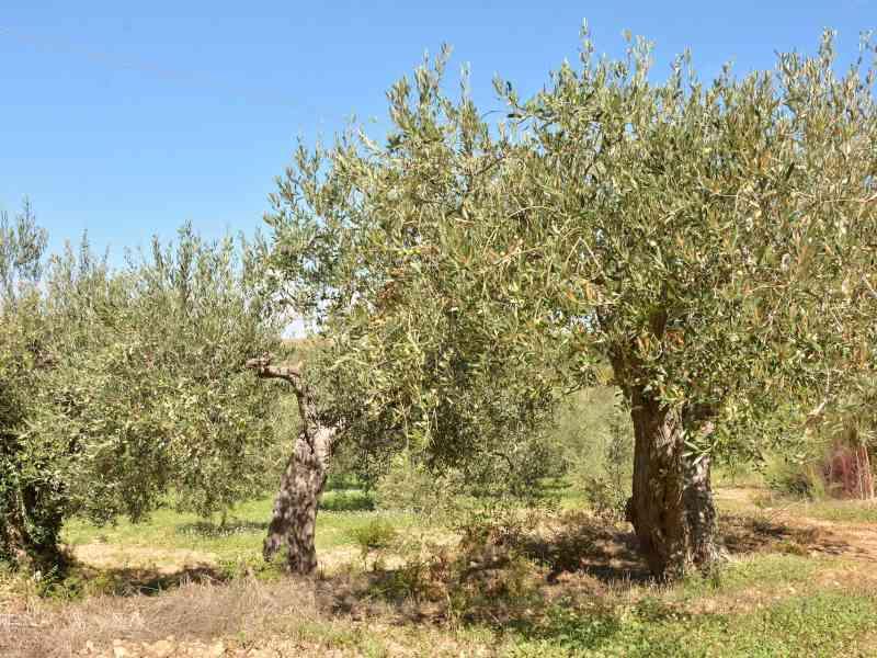 Azienda Agricola la Rocca 3