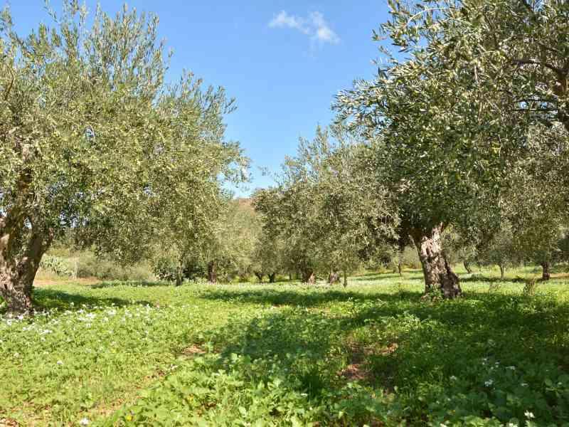 Azienda Agricola la Rocca 6