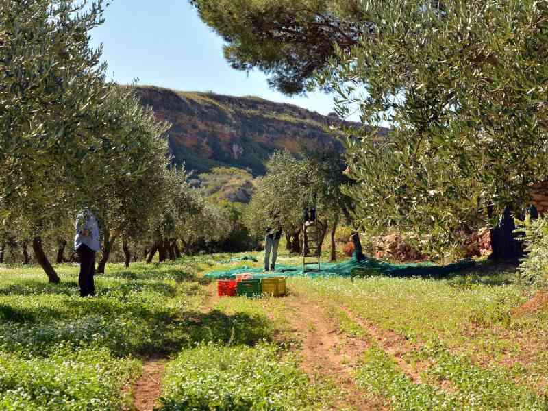 Azienda Agricola la Rocca 21