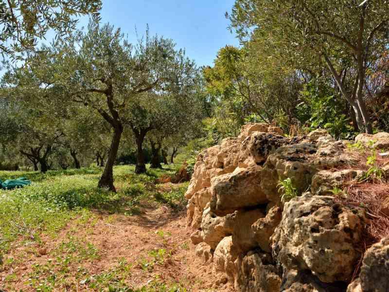 Azienda Agricola la Rocca 25