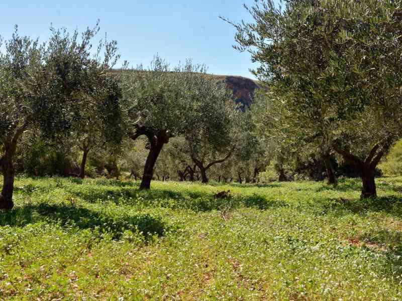 Azienda Agricola la Rocca 27