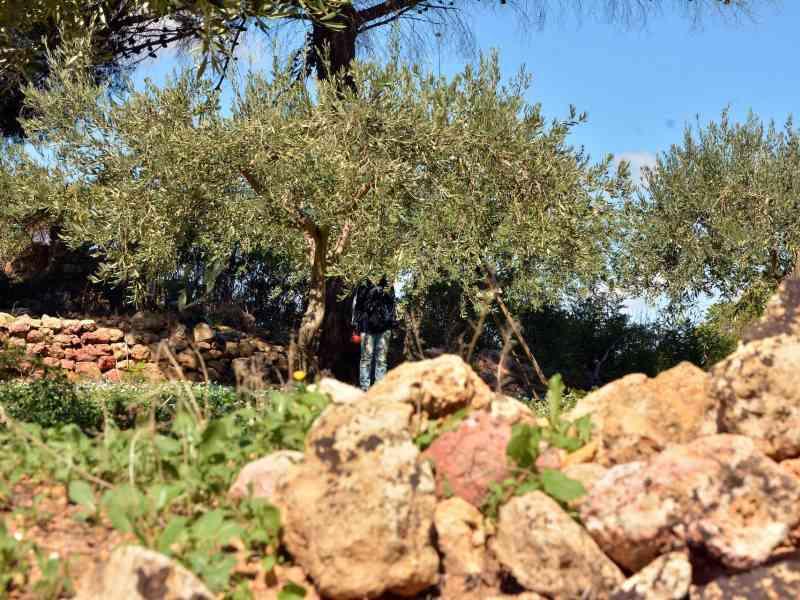 Azienda Agricola la Rocca 28
