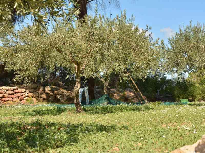 Azienda Agricola la Rocca 29