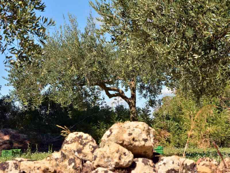 Azienda Agricola la Rocca 30