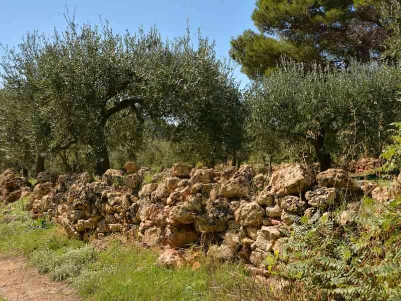 Azienda Agricola la Rocca 34