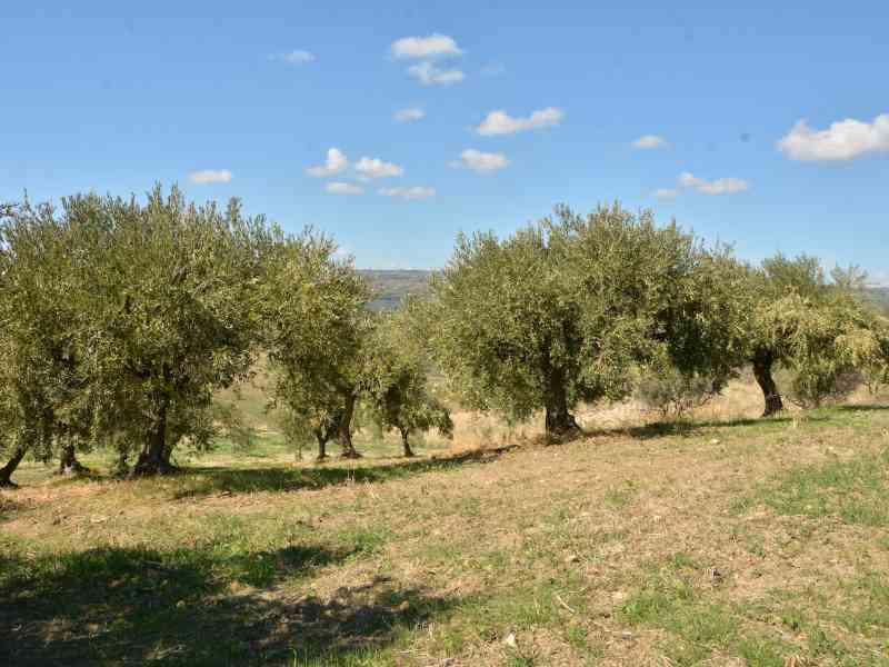 Azienda Agricola la Rocca 36