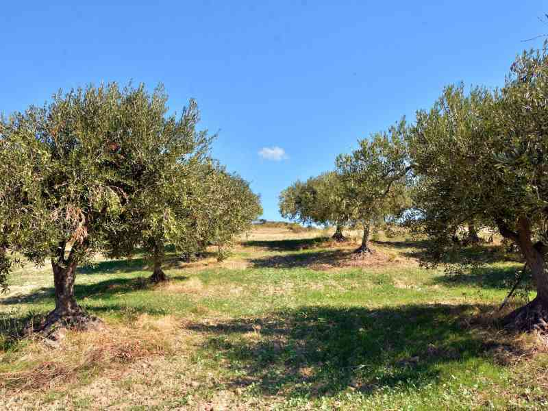 Azienda Agricola la Rocca 40