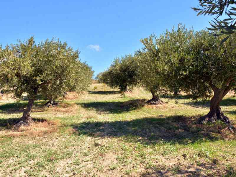 Azienda Agricola la Rocca 41