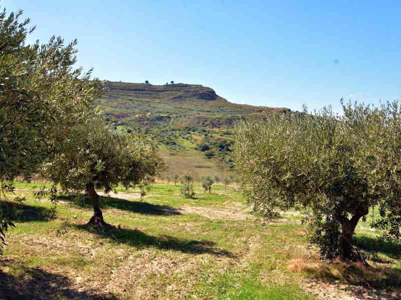 Azienda Agricola la Rocca 42