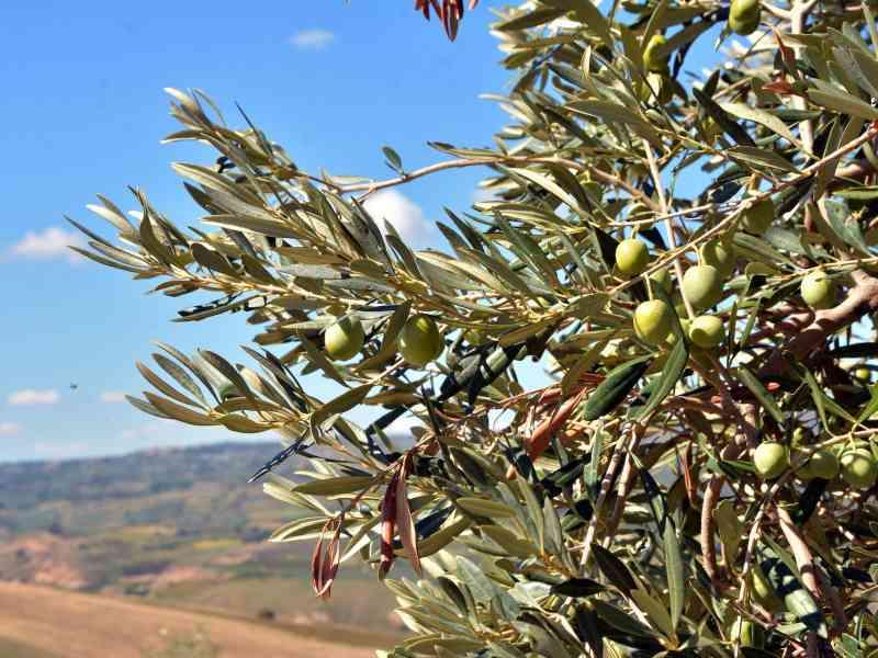 Azienda Agricola la Rocca 43