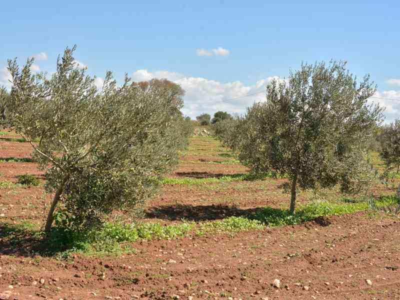 Azienda Agricola la Rocca 45