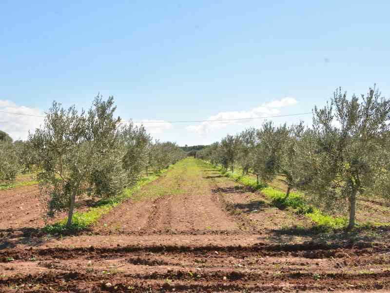 Azienda Agricola la Rocca 46