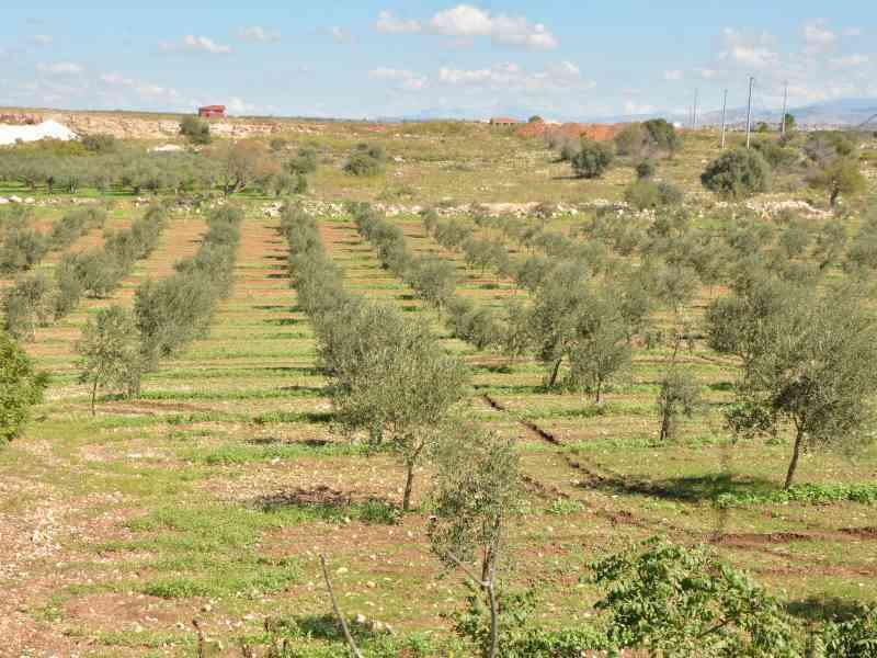 Azienda Agricola la Rocca 48