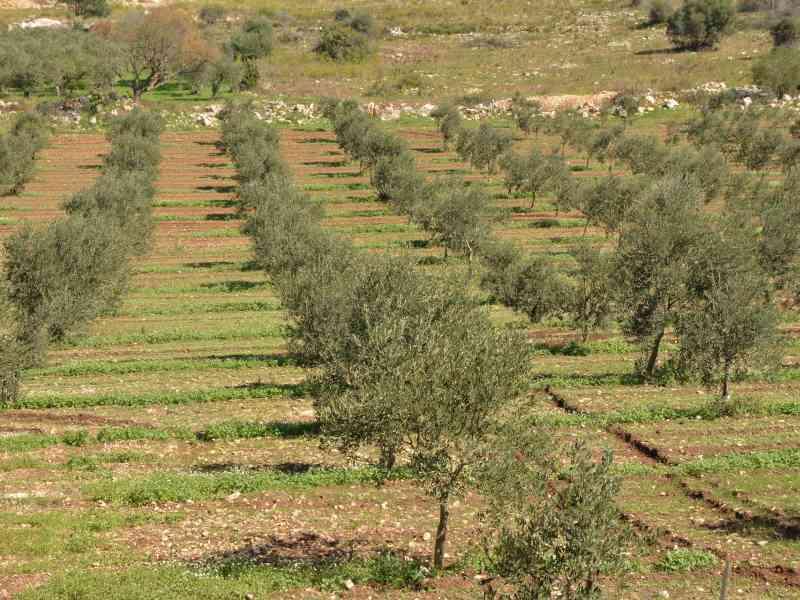 Azienda Agricola la Rocca 49
