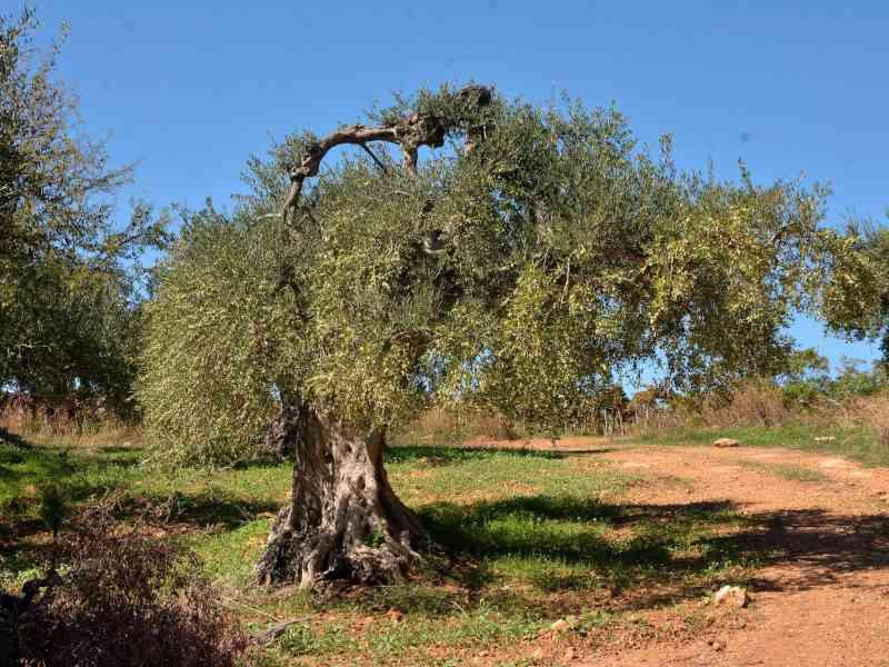 Azienda Agricola la Rocca 50