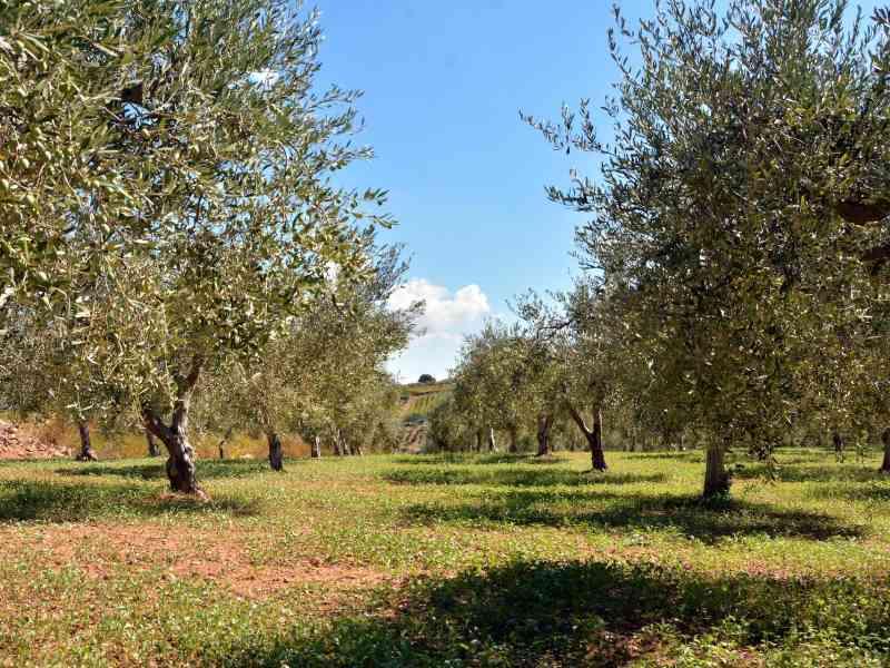 Azienda Agricola la Rocca 53