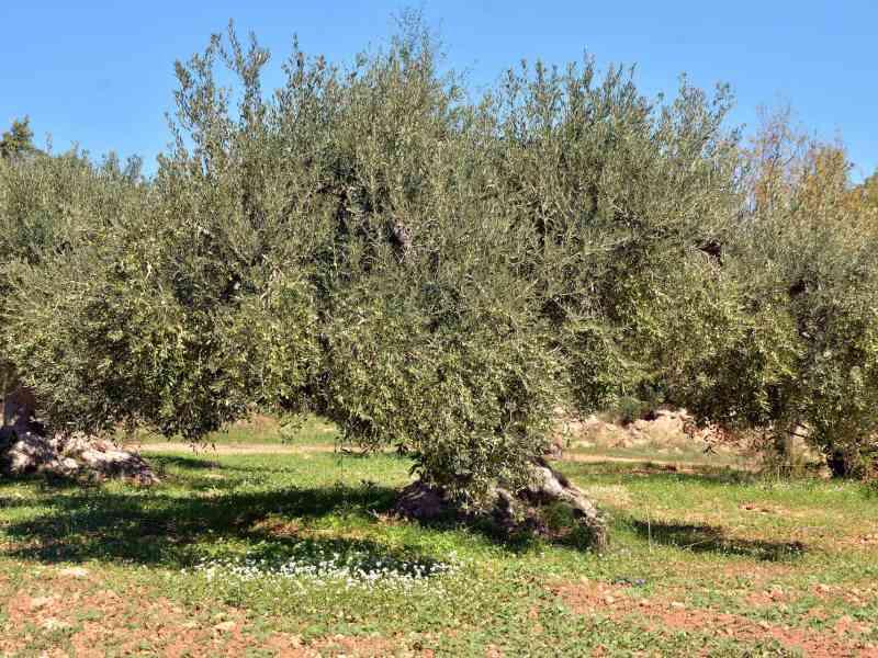 Azienda Agricola la Rocca 54