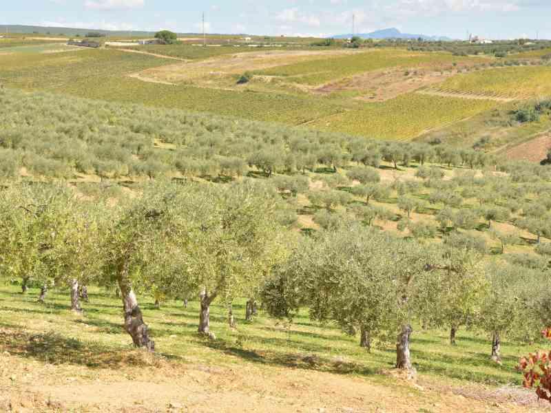 Azienda Agricola la Rocca 55