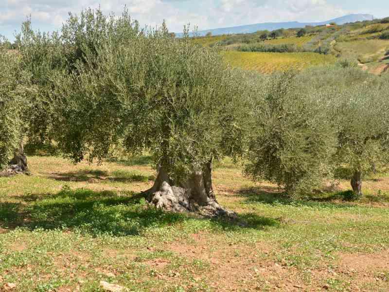Azienda Agricola la Rocca 58