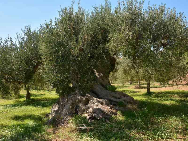 Azienda Agricola la Rocca 59