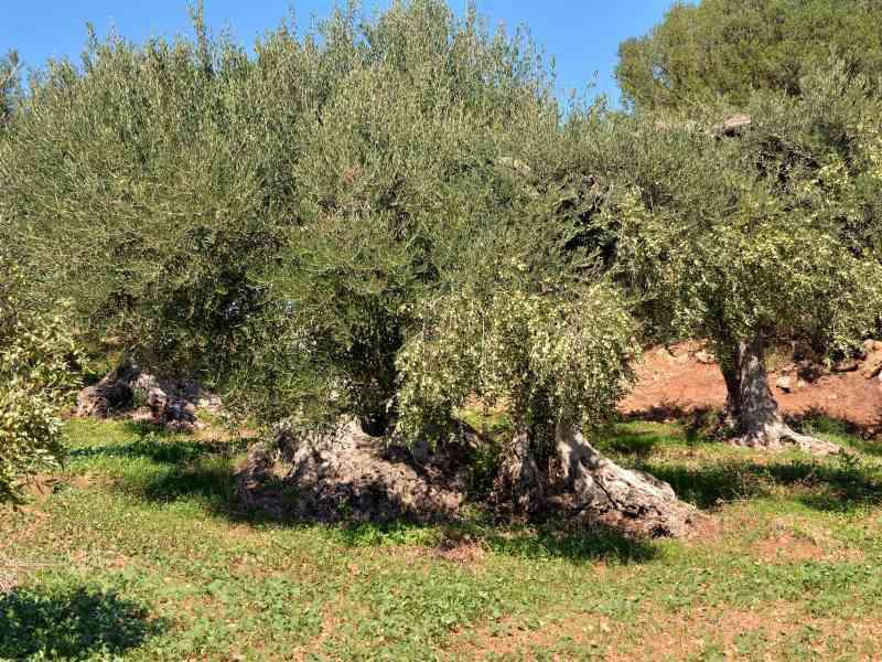Azienda Agricola la Rocca 60