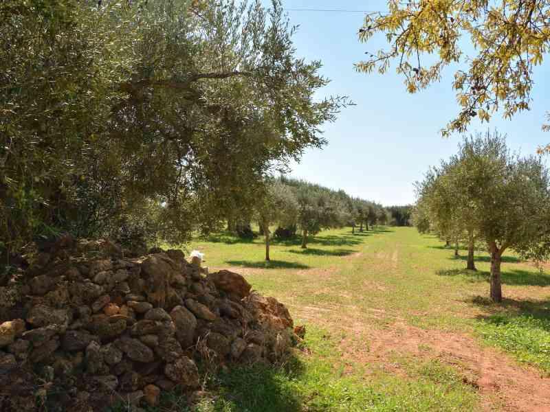 Azienda Agricola la Rocca 64